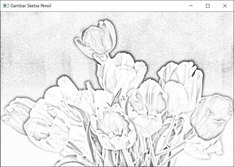 tulips-sketsa pensil-inpows