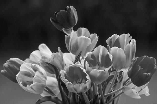 tulips-gray